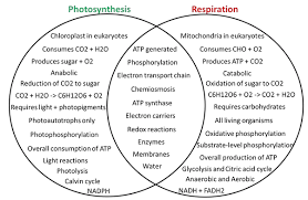 Plant Phys Relationship Between Photosynthesis And Cellular